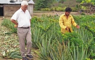 Aloe Vera Produkte von Padre Bertram Wick